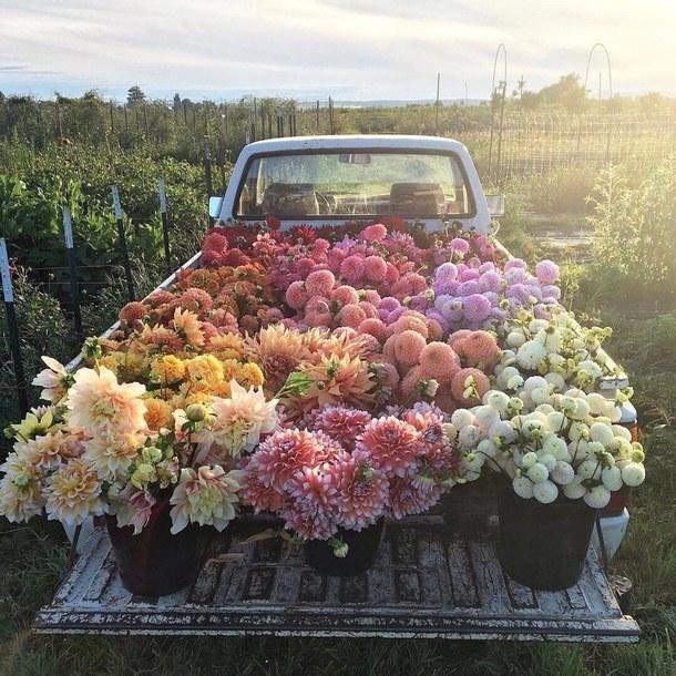 花を積んだトラック